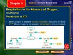 respiration in the absence of oxygen continued3