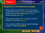 respiration in the absence of oxygen