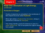 stage one absorption of light energy continued2