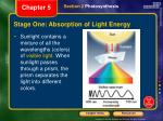 stage one absorption of light energy