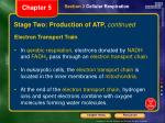 stage two production of atp continued2