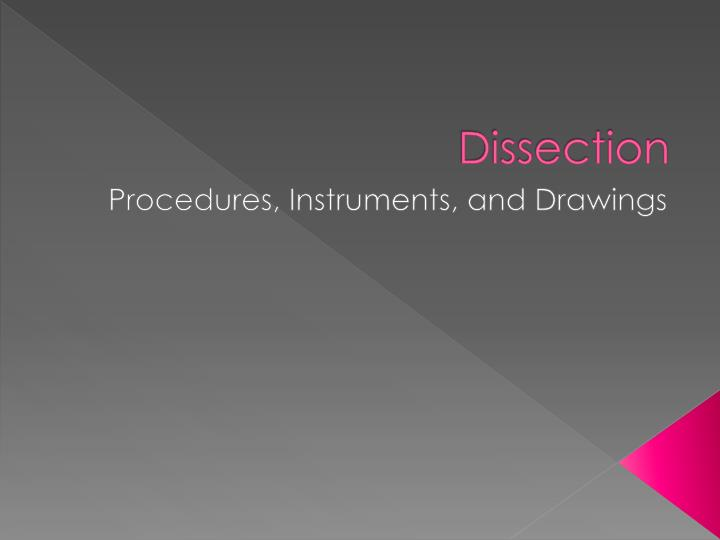 dissection n.