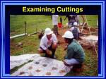 examining cuttings