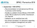bpac parvovirus b19