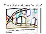 the spiral staircase unzips