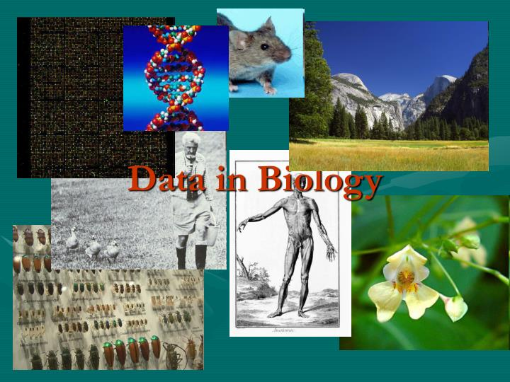 data in biology n.