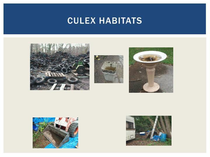 Culex habitats