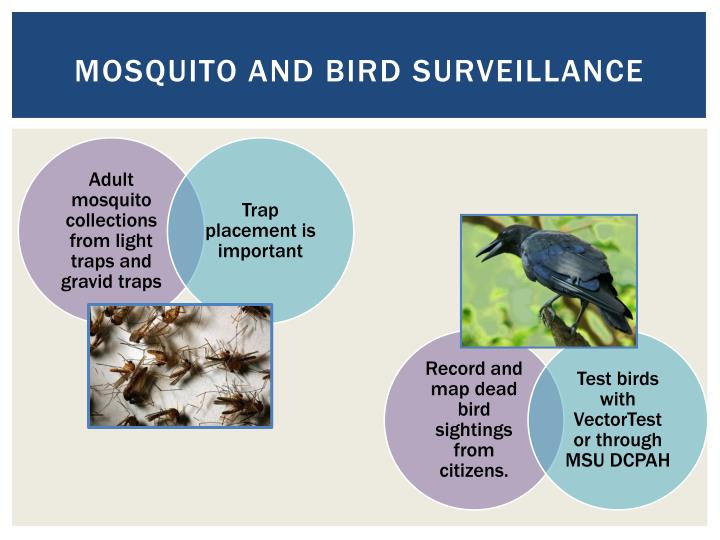 Mosquito and Bird surveillance