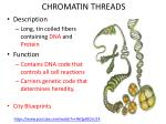 chromatin threads