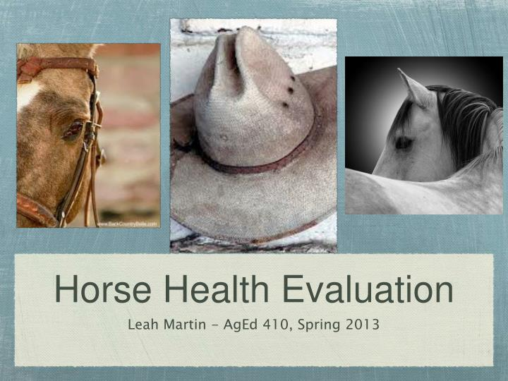 horse health evaluation n.