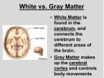 white vs gray matter