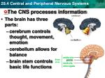 the cns processes information