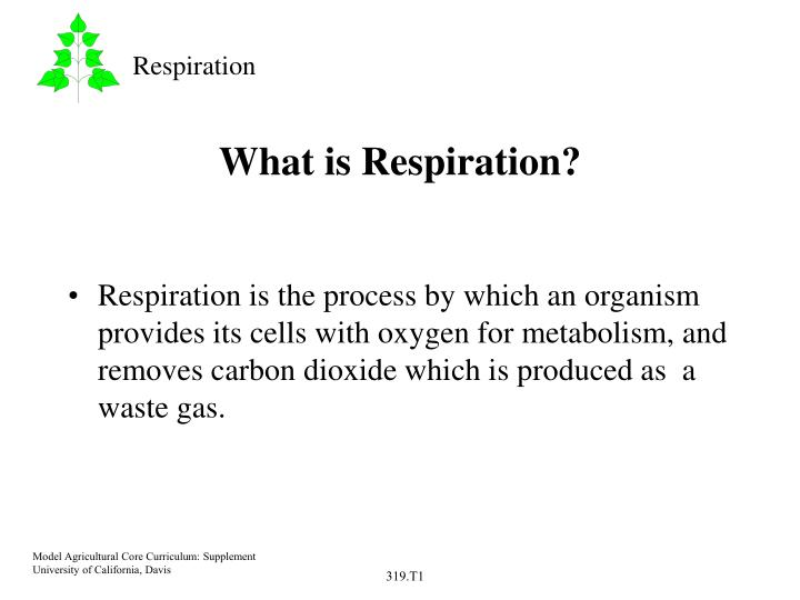 what is respiration n.