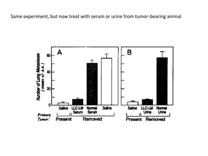 Same experiment, but now treat with serum or urine from tumor-bearing animal