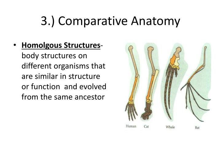 PPT - Evolution Overview Charles Darwin PowerPoint Presentation - ID ...