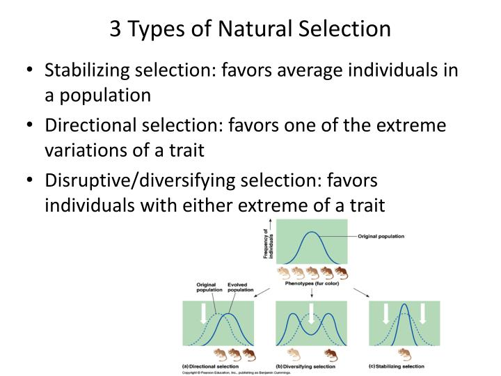 types of natural selection The type of selection is directional, for one of the extremes is being favored (dark mice) and one is being selected against (white mice) see directional selection graph above.