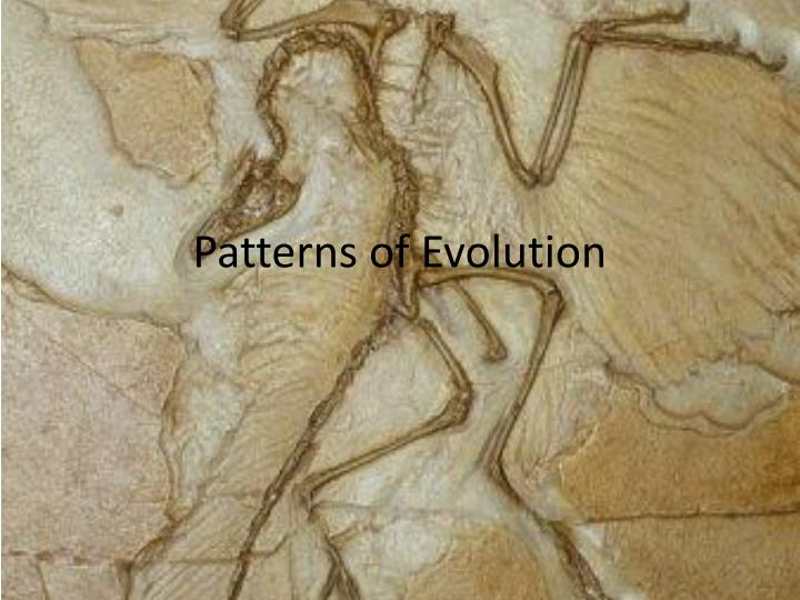 patterns of evolution n.
