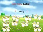 how many ducks