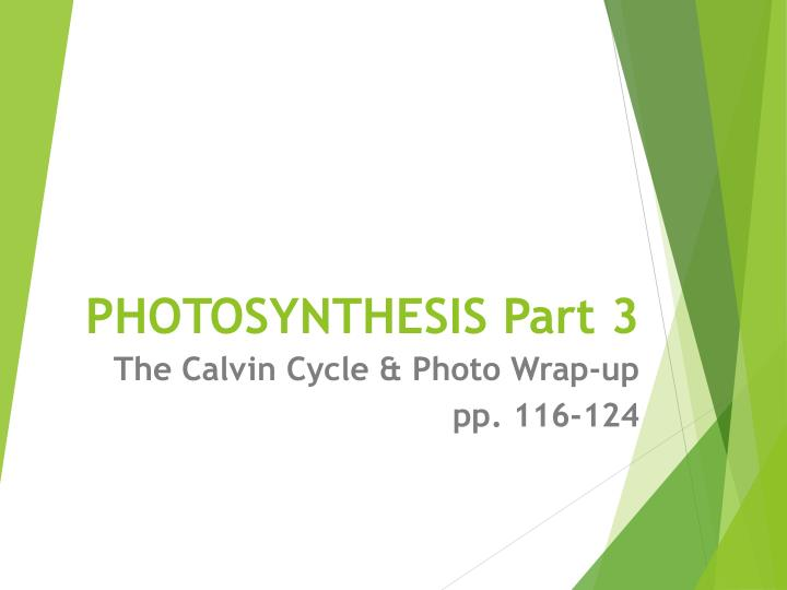photosynthesis part 3 n.