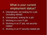 what is your current employment status