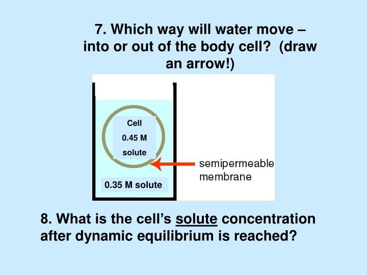 7. Which way will water move – into or out of the body cell?  (draw an arrow!)
