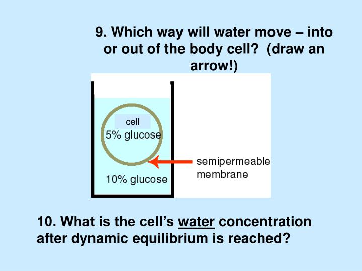 9. Which way will water move – into or out of the body cell?  (draw an arrow!)
