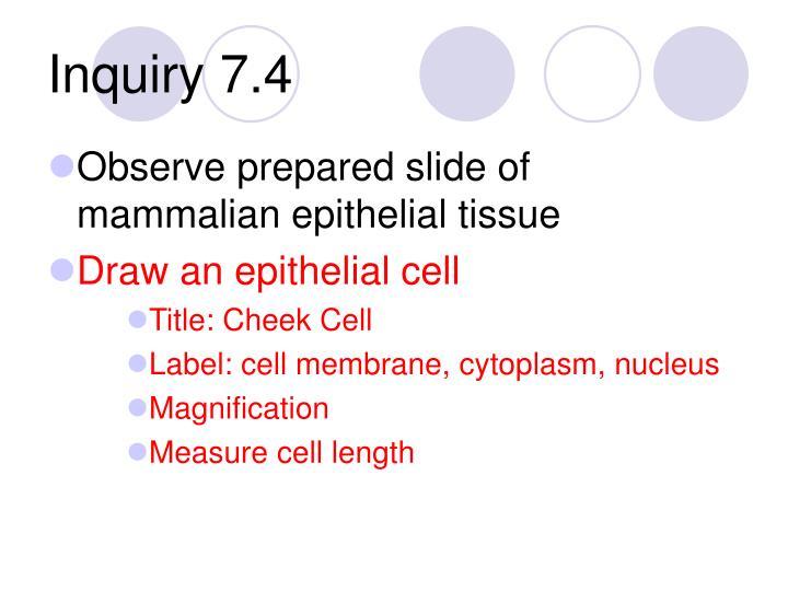 Inquiry 7.4