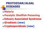 protozoan algal diseases