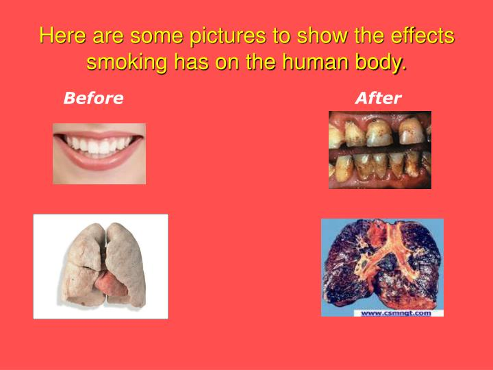 the effects of smoking in the human body Long-term smoking can damage the body beyond  secondhand smoke is perhaps the worst effects of smoking it is the one effect that goes beyond simply harming the.