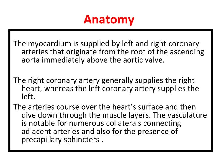 PPT - CORONARY CIRCULATION PowerPoint Presentation - ID:6863102