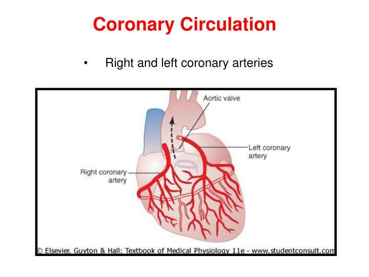 coronary circulation - Akba.greenw.co