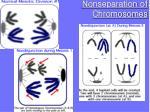 nonseparation of chromosomes1