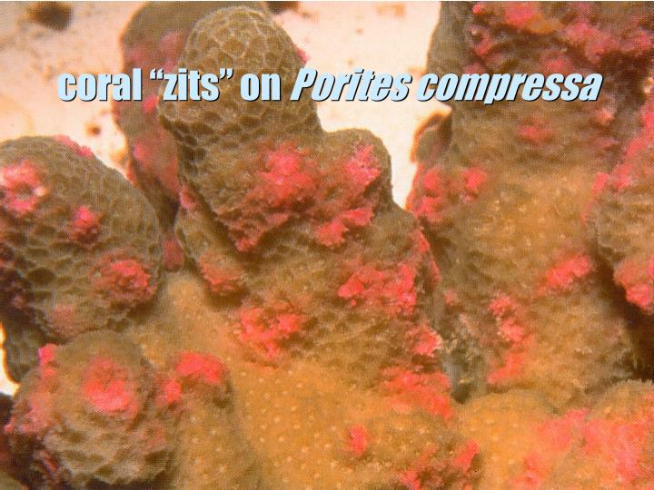 """coral """"zits"""" on"""