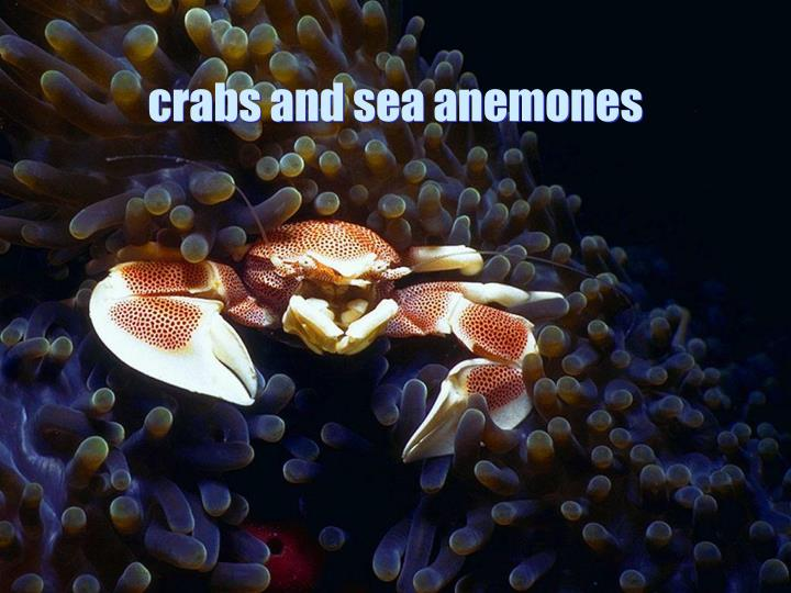 crabs and sea anemones