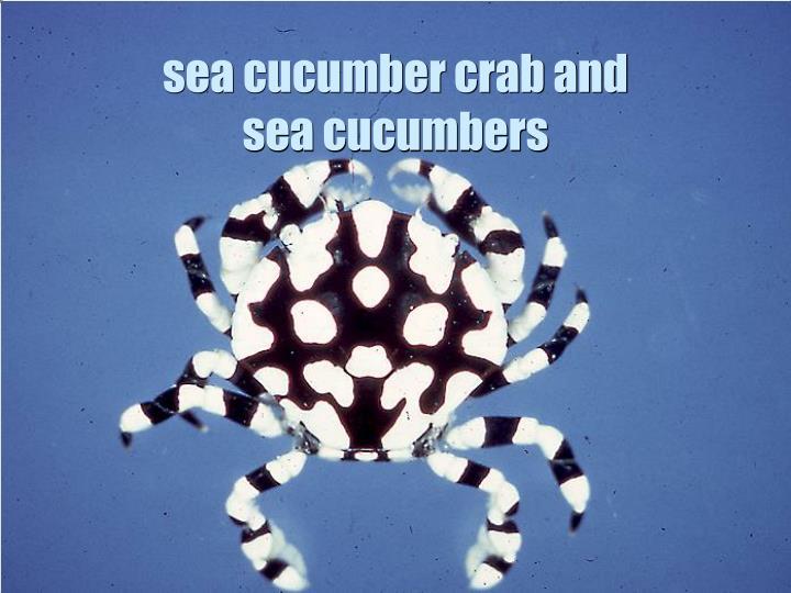 sea cucumber crab and sea cucumbers