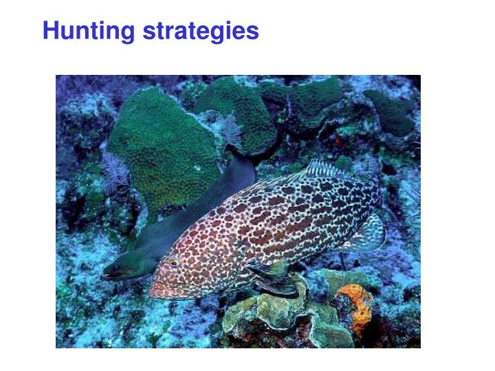 Hunting strategies