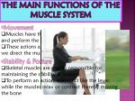 the main functions of the muscle system