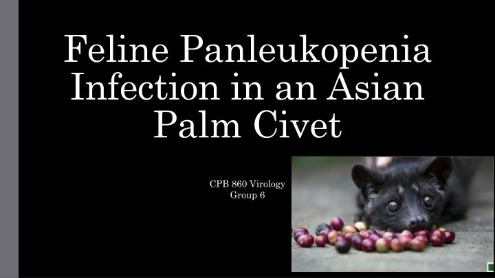 feline panleukopenia infection in an asian palm civet n.