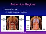 anatomical regions1