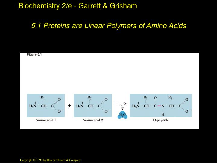 5 1 proteins are linear polymers of amino acids n.