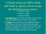 3 glands along the mrs which add fluids to sperm cells to create the fluid known as semen