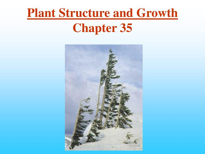 plant structure and growth chapter 35 n.