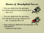review of monohybrid crosses1