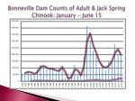 bonneville dam counts of adult jack spring chinook january june 15