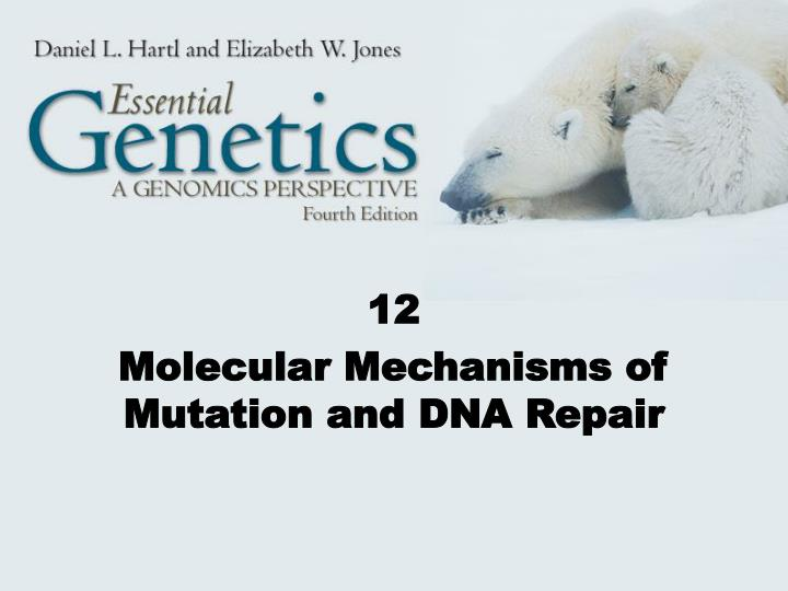 12 molecular mechanisms of mutation and dna repair n.