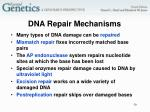 dna repair mechanisms