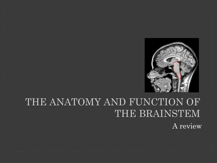 the anatomy and function of the brainstem n.
