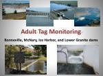adult tag monitoring
