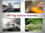pit tag uses in juveniles