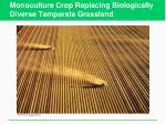 monoculture crop replacing biologically diverse temperate grassland